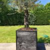 Stalen Boombak douglas hout zwart stalen frame tuin terras