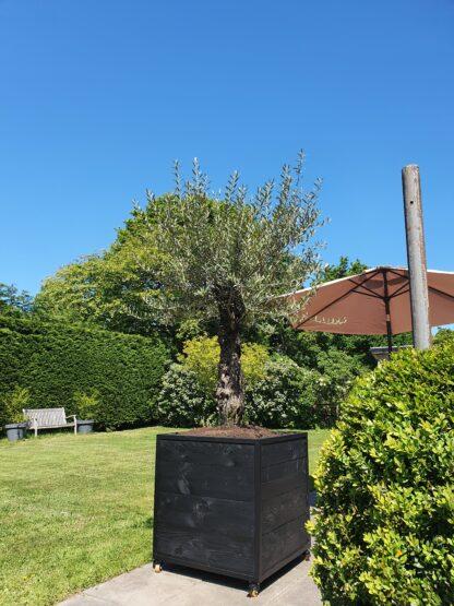 Boombak douglas hout stalen frame zwart staal tuinen olijfboom