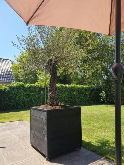Grote boombak Staal douglas hout stalen frame