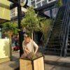 Stalen Boombak plantenbak douglas hout zwart stalen frame tuin terras